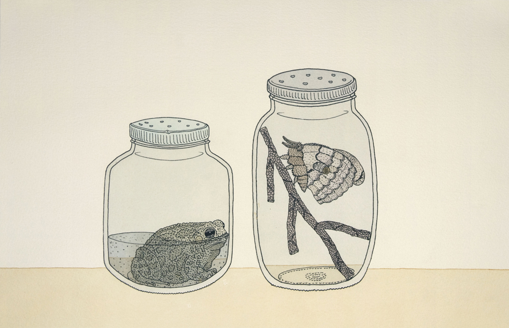 """Toad and Moth"" by Patrick Smyczek. Screen print and watercolor, 17"" x 11"" (2012)."