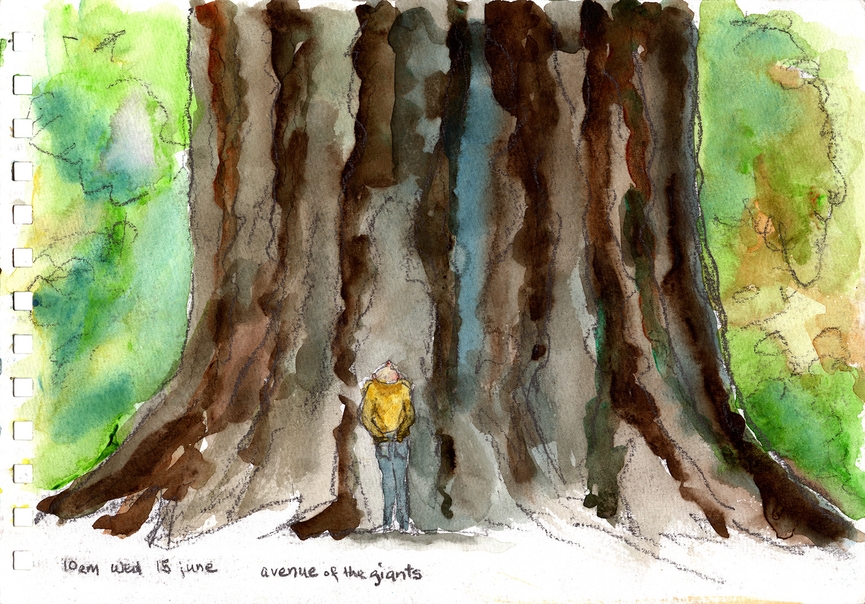 avenue of the giants 10am wed 18 june