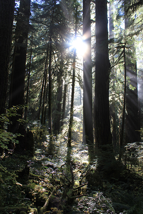 photo in the H.J. Andrews Forest in Blue River, OR