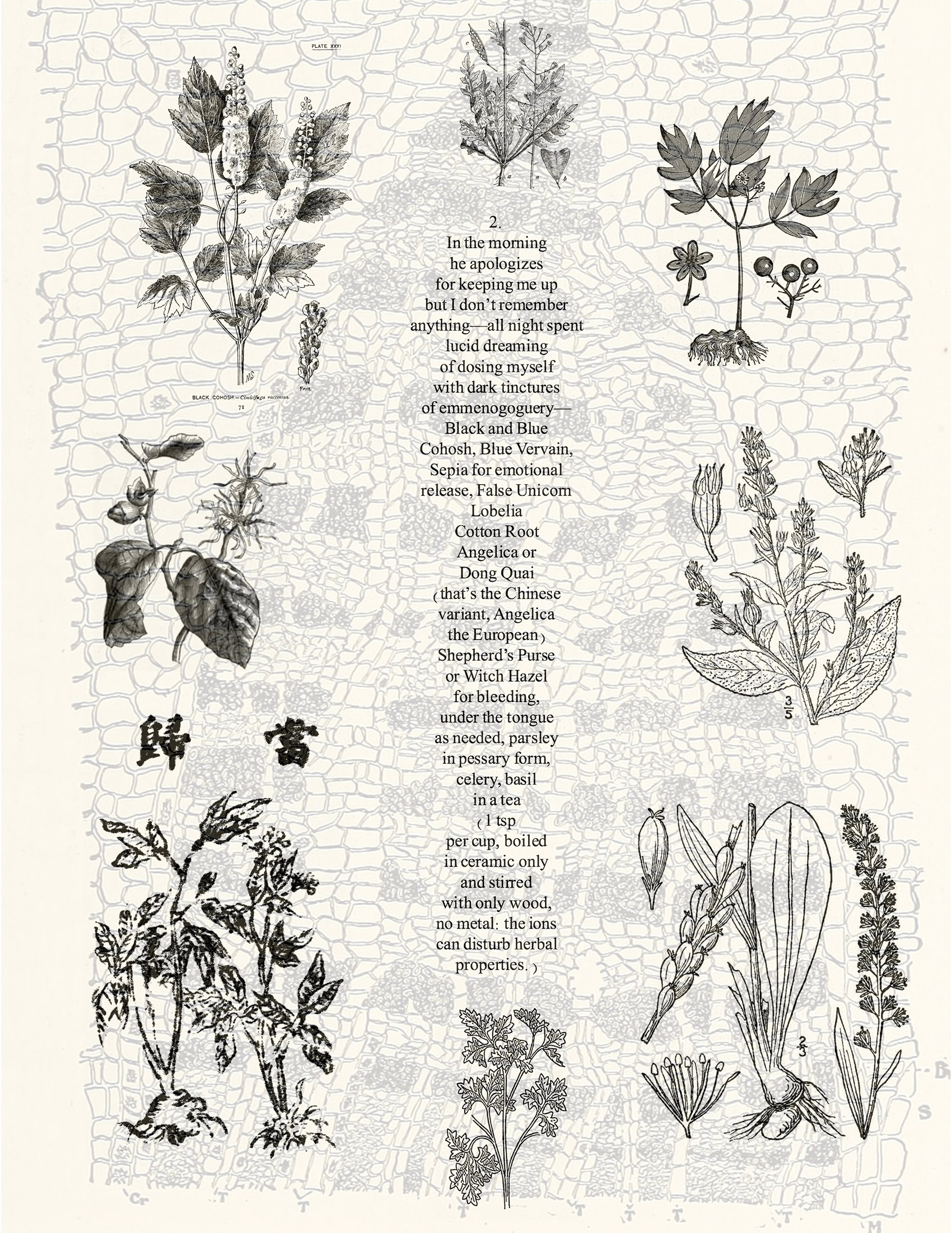 poem referencing herbal remedies superimposed over botanical illustrations of herbs