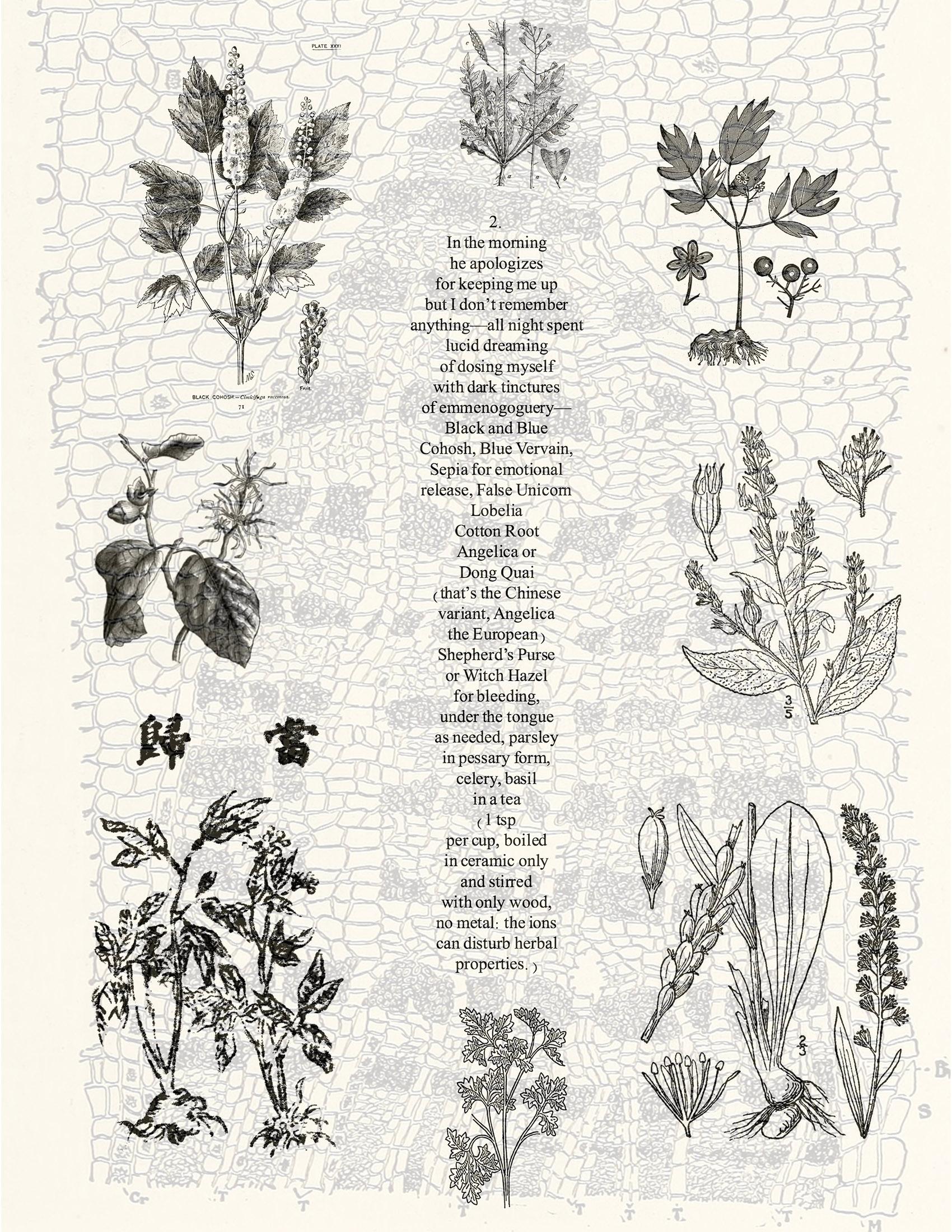 poem referencing herbal remedies superimposed over botanical illustrations of herbs