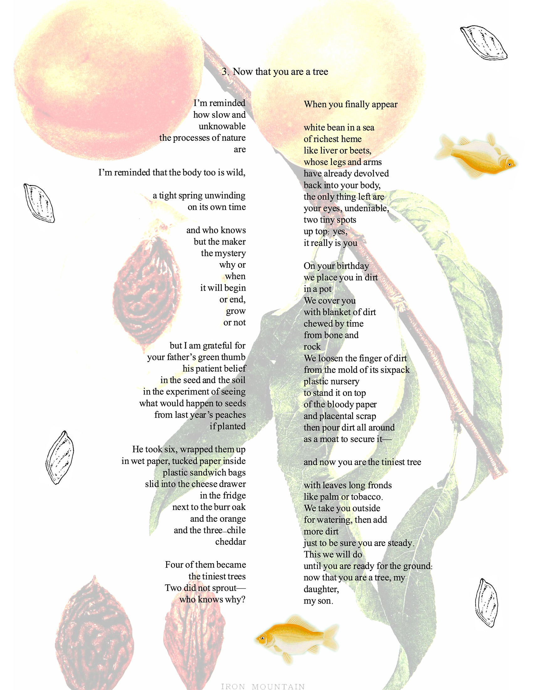 poem referencing peach trees and burial superimposed over botanical illustrations of peach tree leaves, fruit and pits