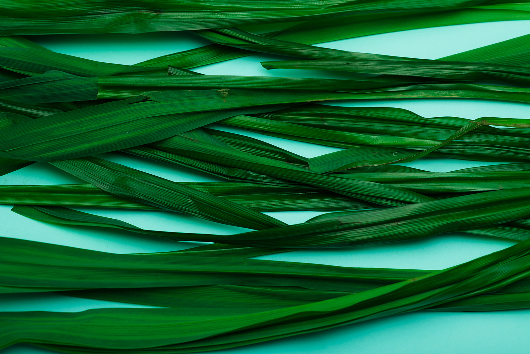 Photo of pandan leaves