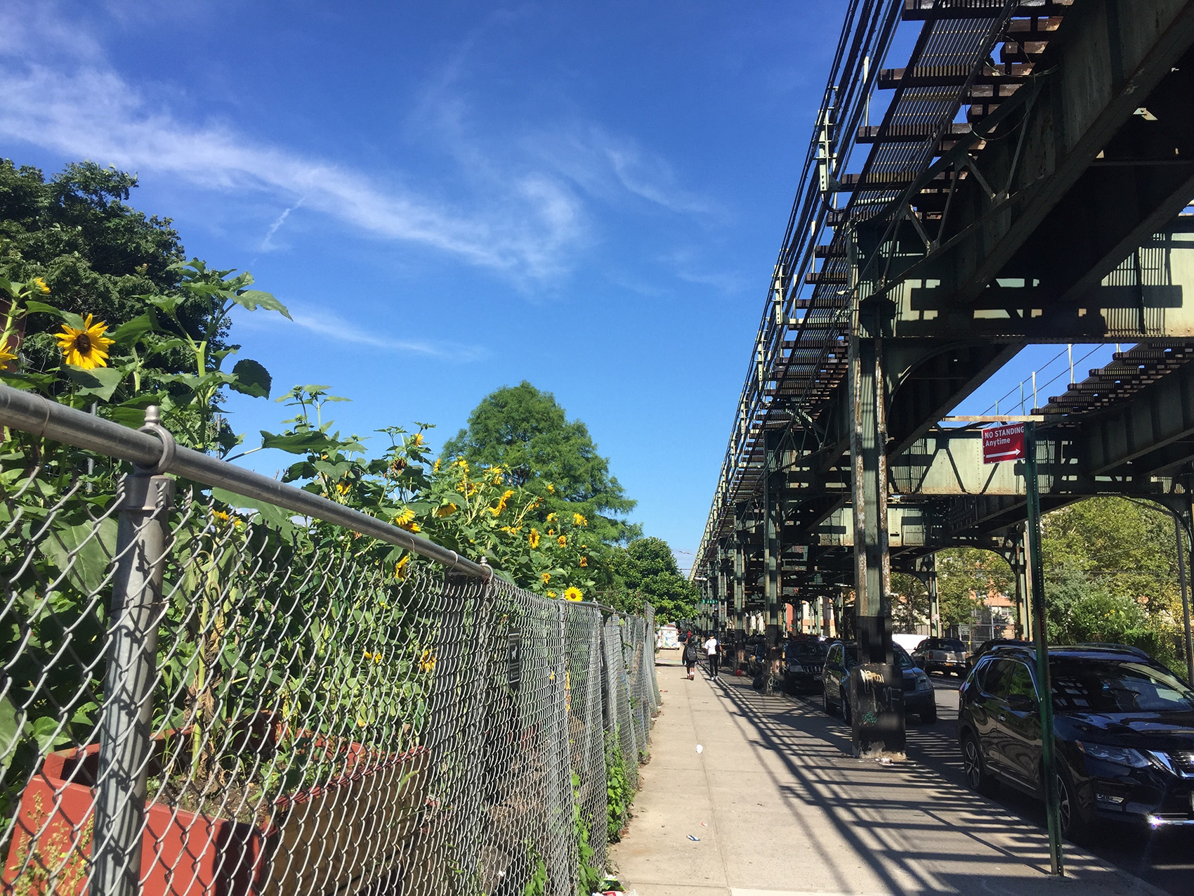 vegetable garden behind chain-link fence alongside parked cars and elevated train tracks