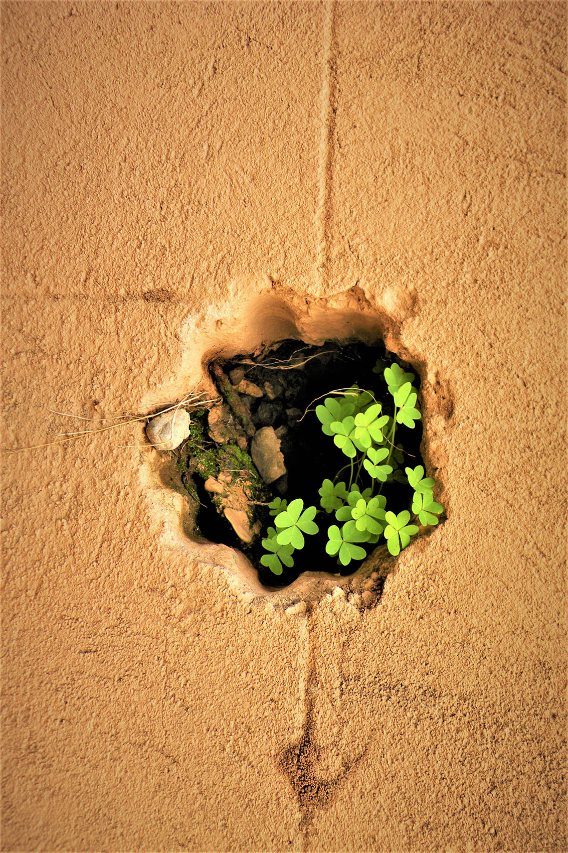 photo of plant growing in crack - Taking Root by Anjela Villarreal Ratliff