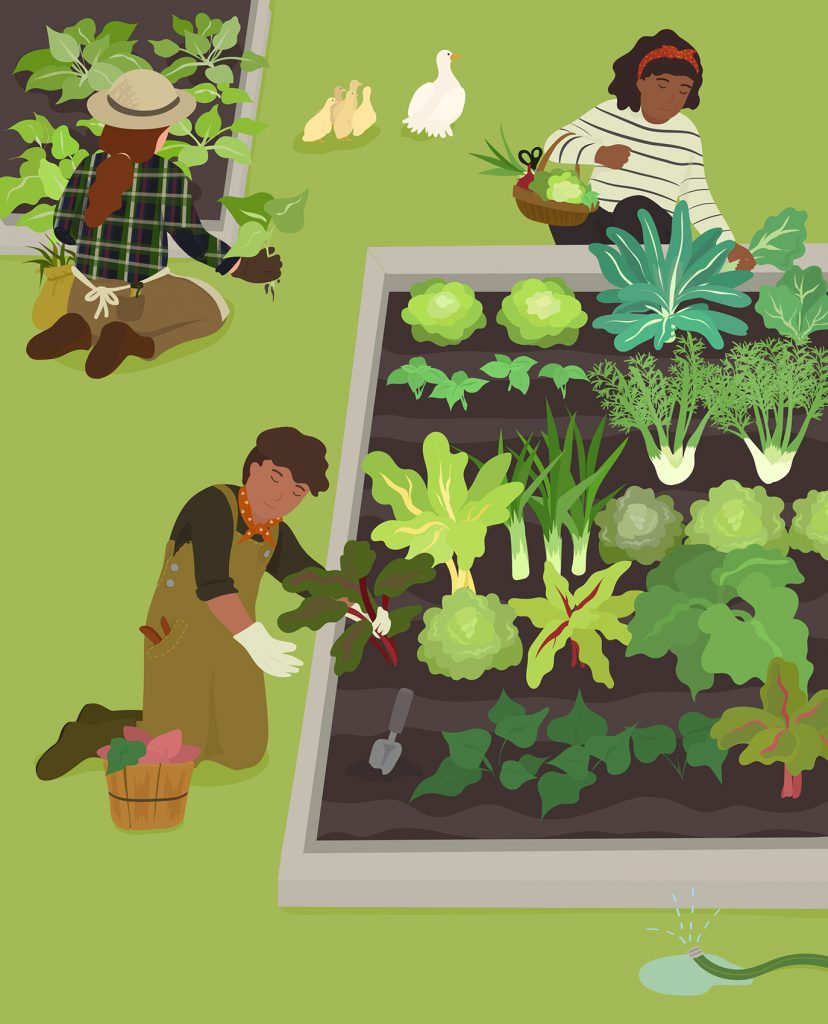 illustration of people working in a vegetable garden