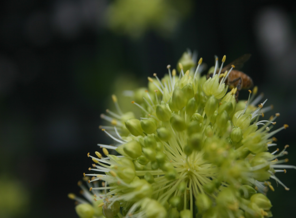close-up of flower with bee