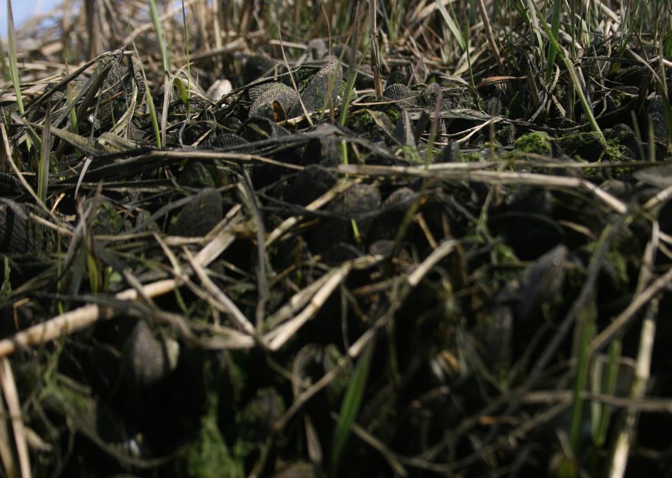 close-up photo of swamps, sticks, grass