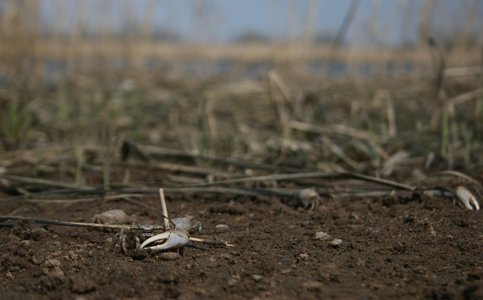 close-up photo of dirt and crab claw