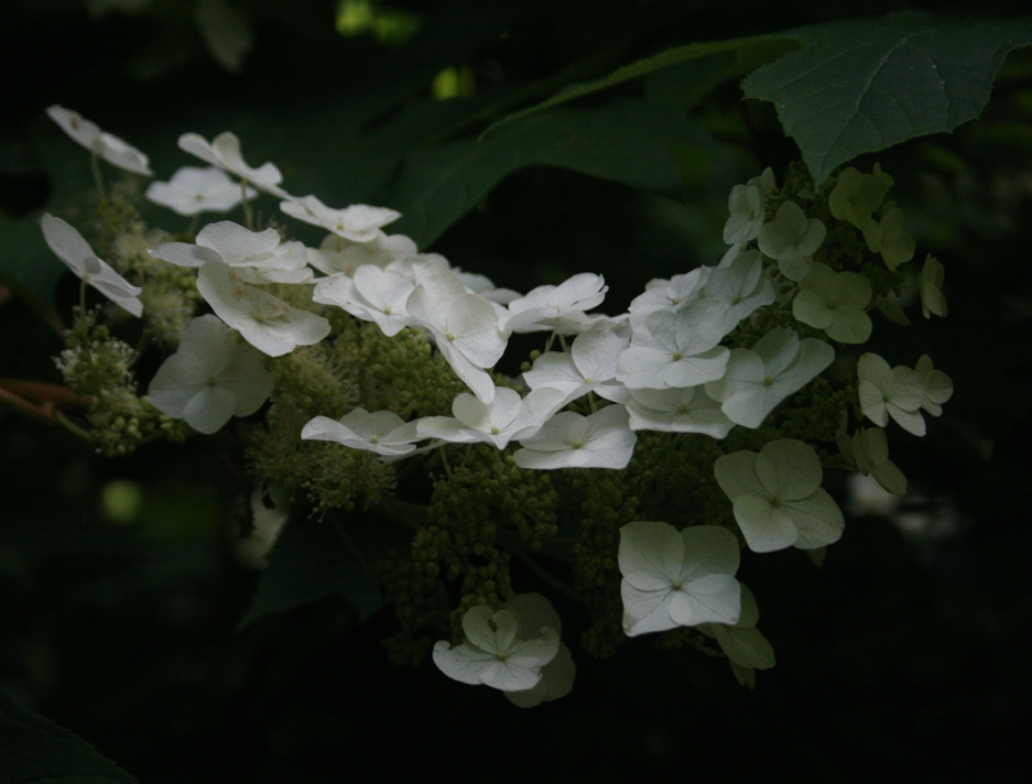 photo of white flowers and leaves on dark background