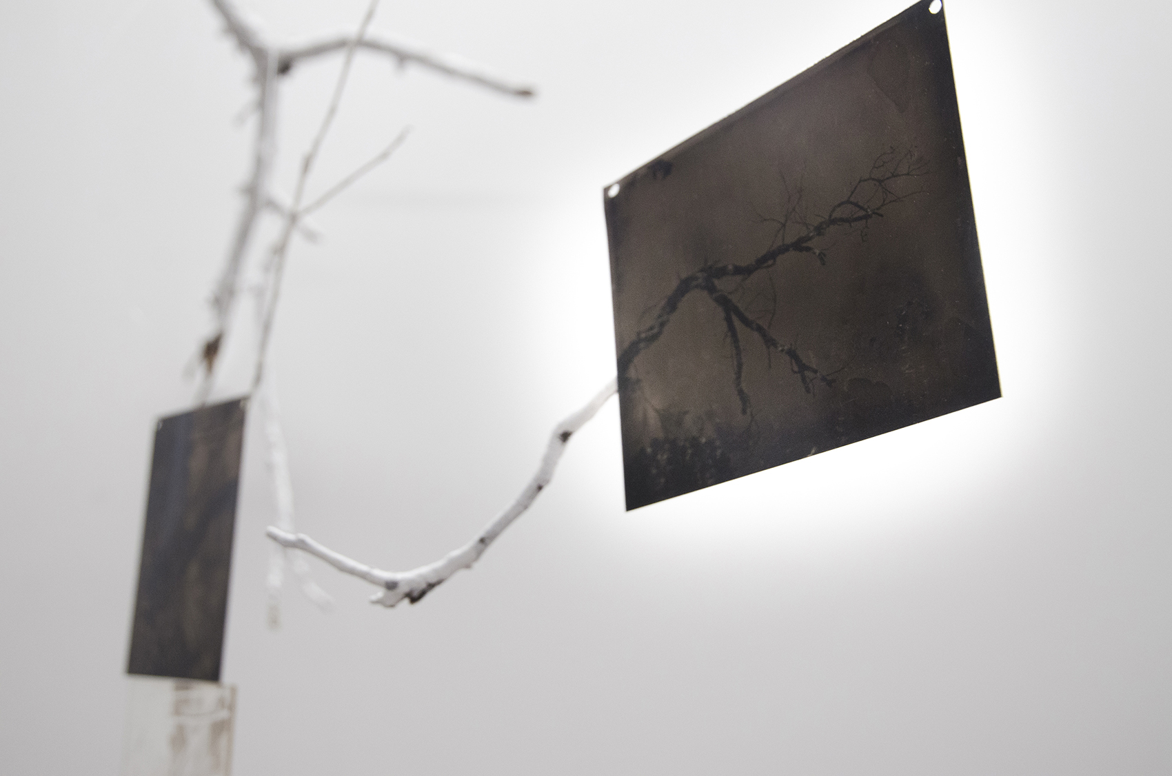 photo of Wispobish art installation featuring tree branches and wet plate collodion photography