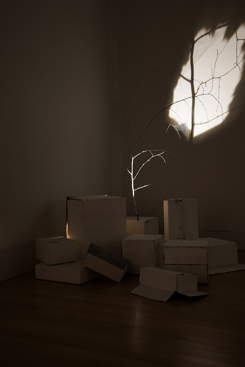 photo of Wispobish art installation featuring tree branches and white-washed cardboard boxes