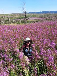 photo of a person in a field of purple flowering fireweed