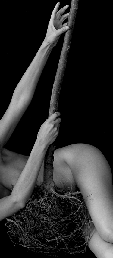 black and white photo of a nude woman holding a bare root tree, reaching up the trunk