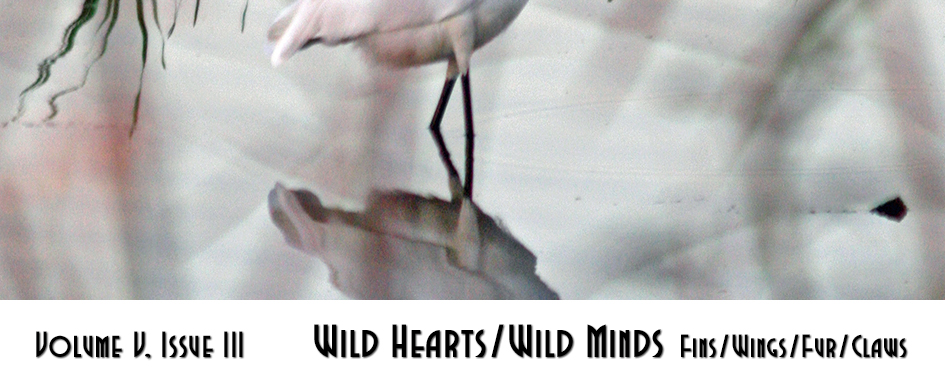 Section header: Wild Hearts/Wild Minds: Fins/Wings/Fur/Claws