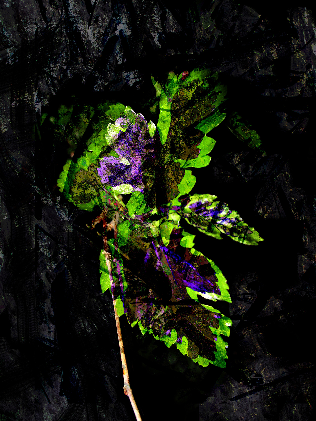 After the Echo by Aaron Lelito: abstract leaf shapes in bright purple and green on a black background