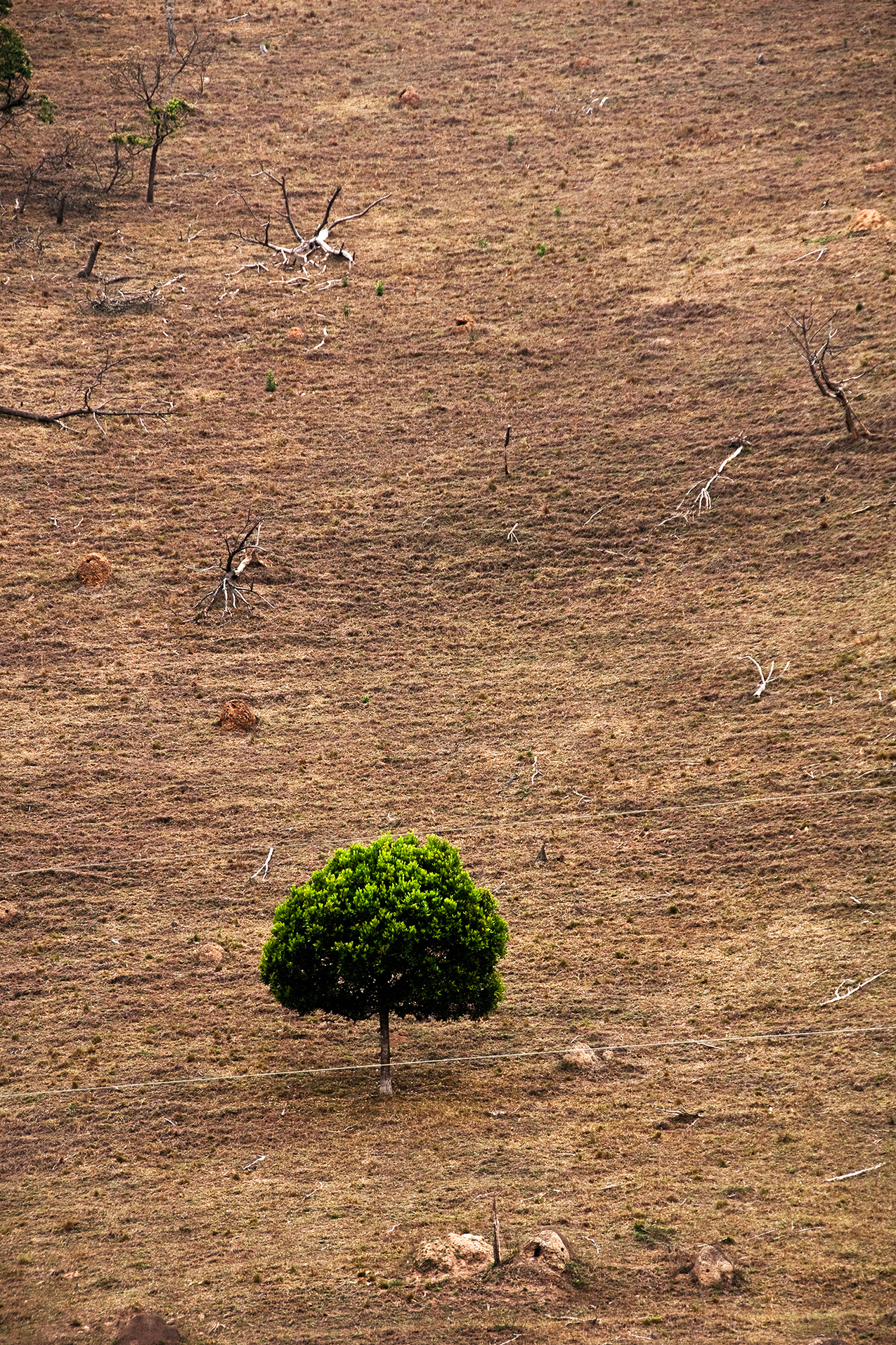 One Tree Left by Guilherme Bergamini: photo of a solitary green tree surrounded by dry desolate landscape