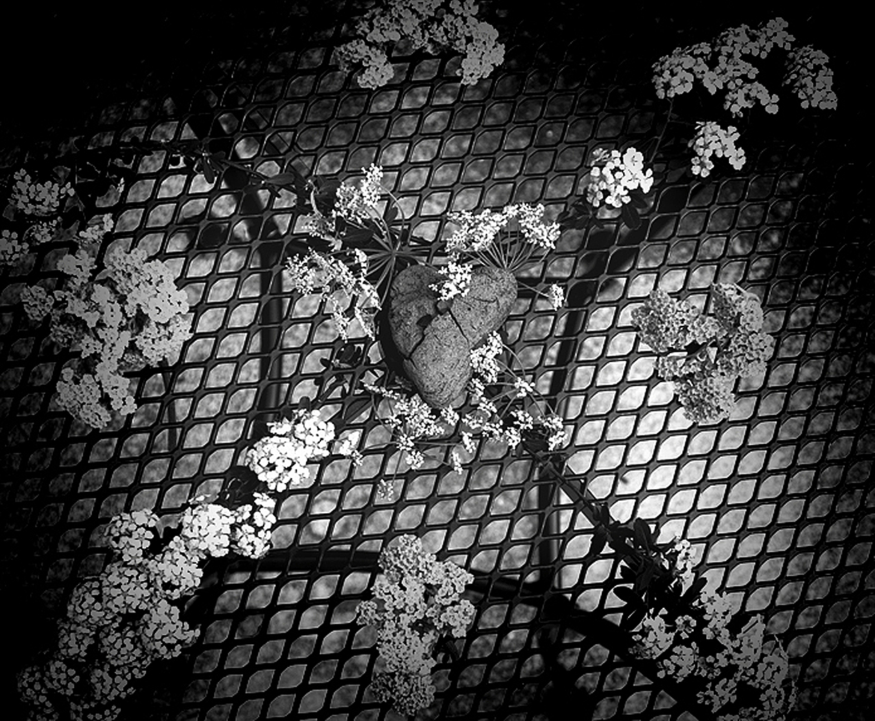 black and white photo of a heart shaped rock sitting on a grate with delicate white flowers