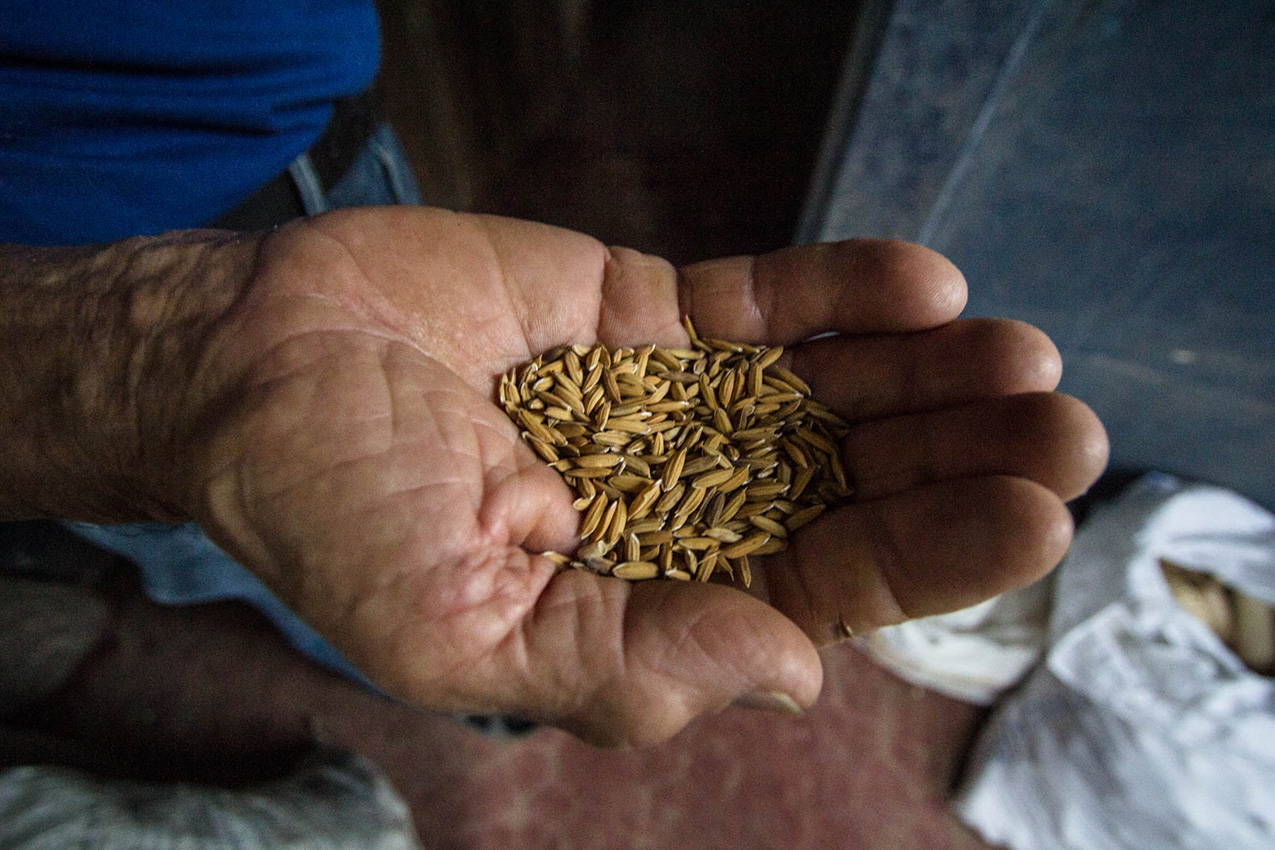 A 70-year-old Costa Rican man holds a handful of seed