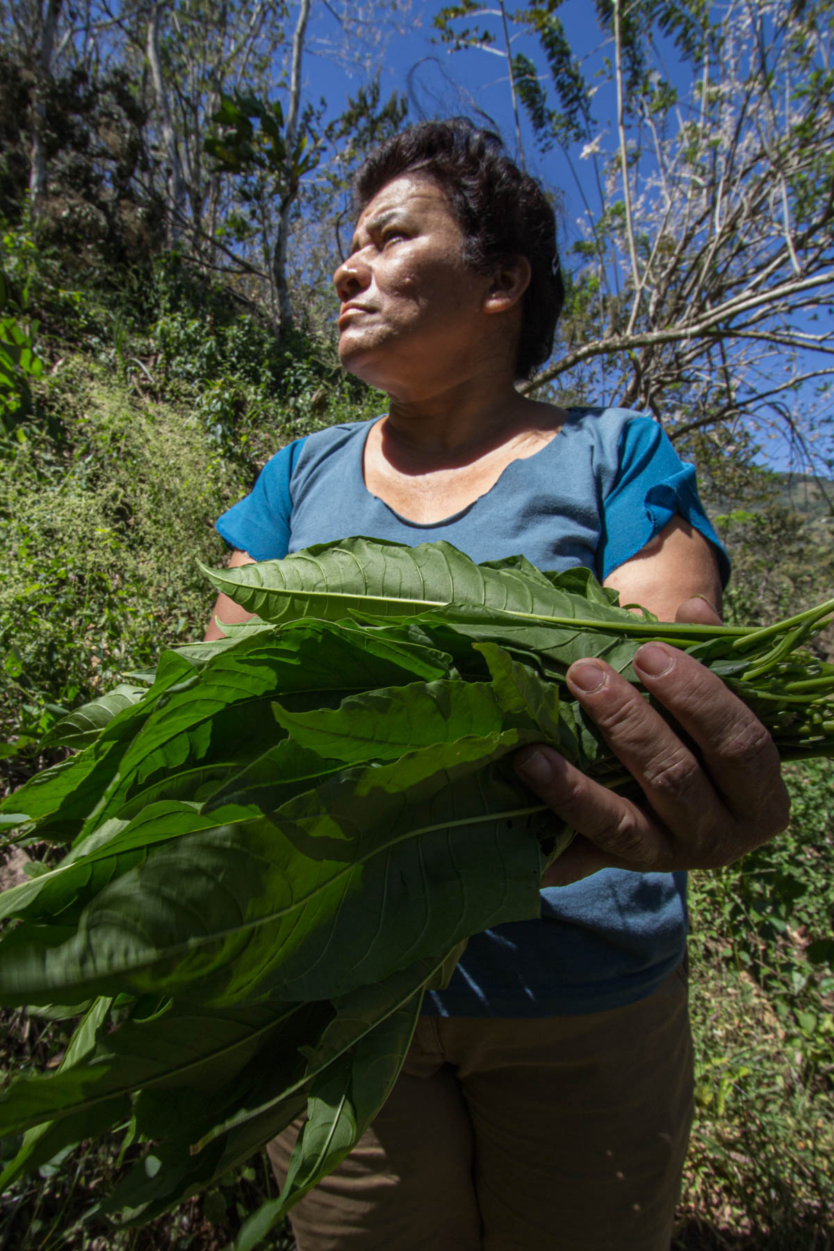 A Costa Rican woman holds wild kioro leaves for dinner