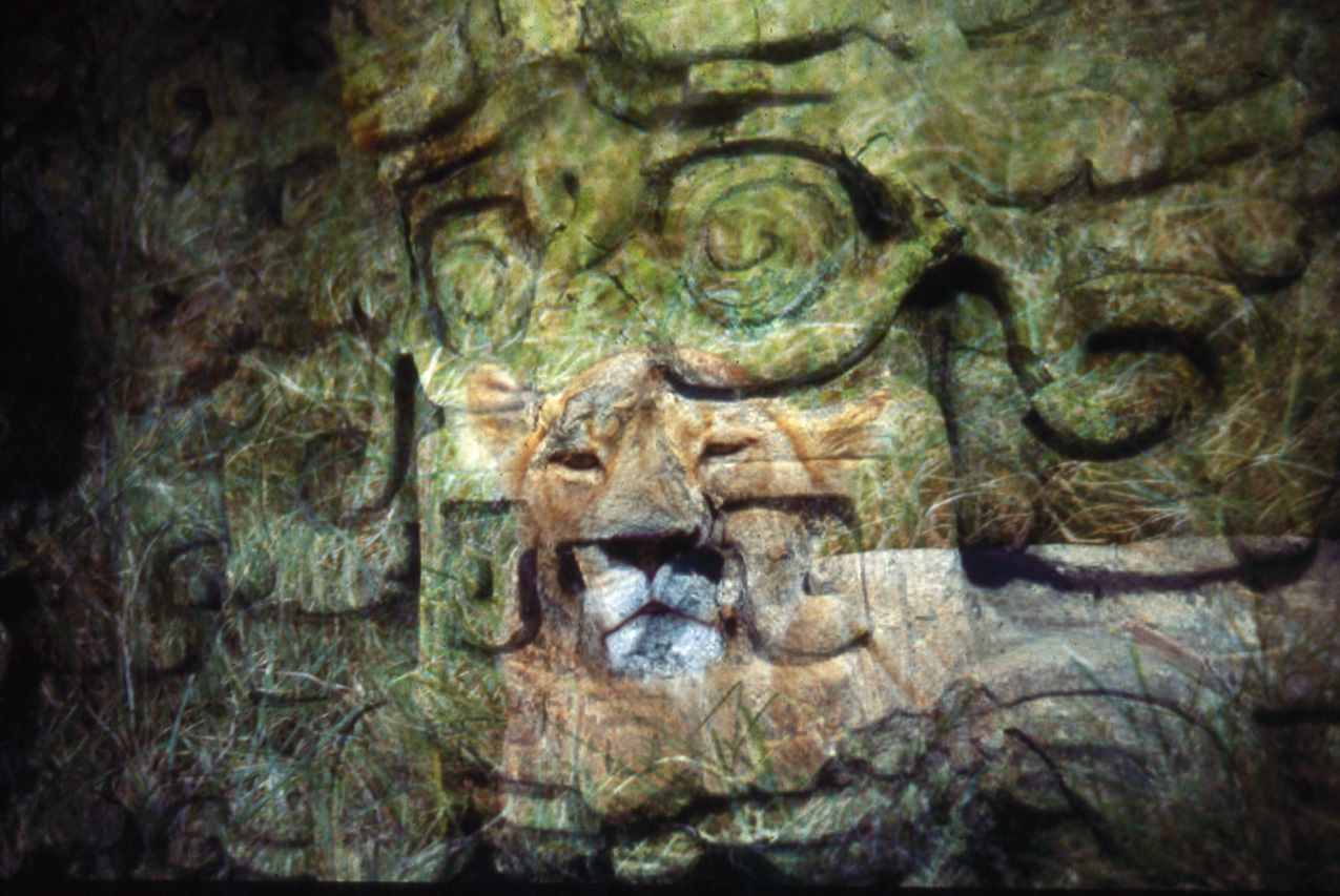 double-exposure photo featuring a female lion laying on grass and stone relief carvings of faces on temple walls