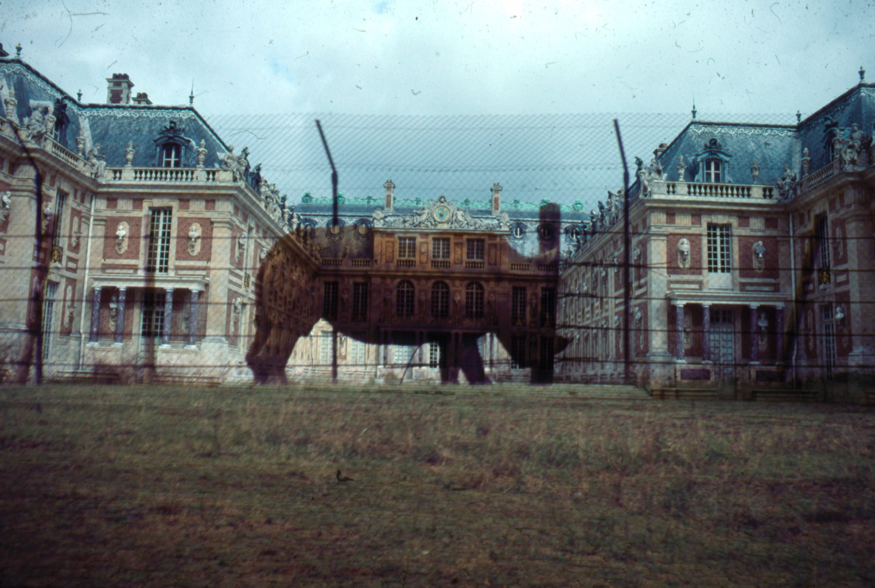 double-exposure photo featuring the Palace of Versailles and a rhinoceros