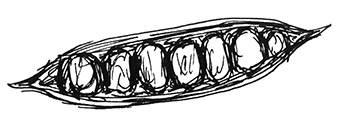 small black and white sketch of a peapod