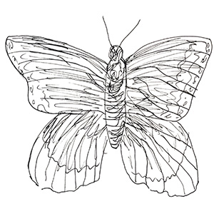 small black and white sketch of a butterly