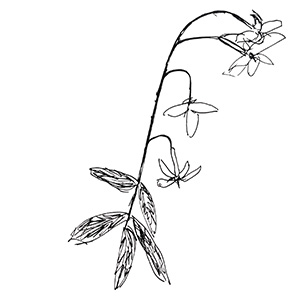 small black and white sketch of a flower and stalk