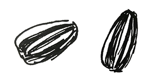 small black and white sketch of two sunflower seeds