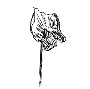small black and white sketch of a flower