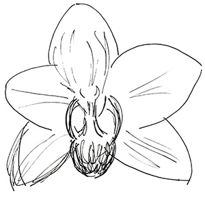 small black and white sketch of an orchid blossom