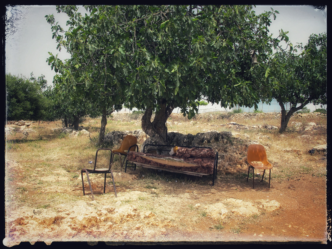broken chairs and sofa underneath a tree's canopy