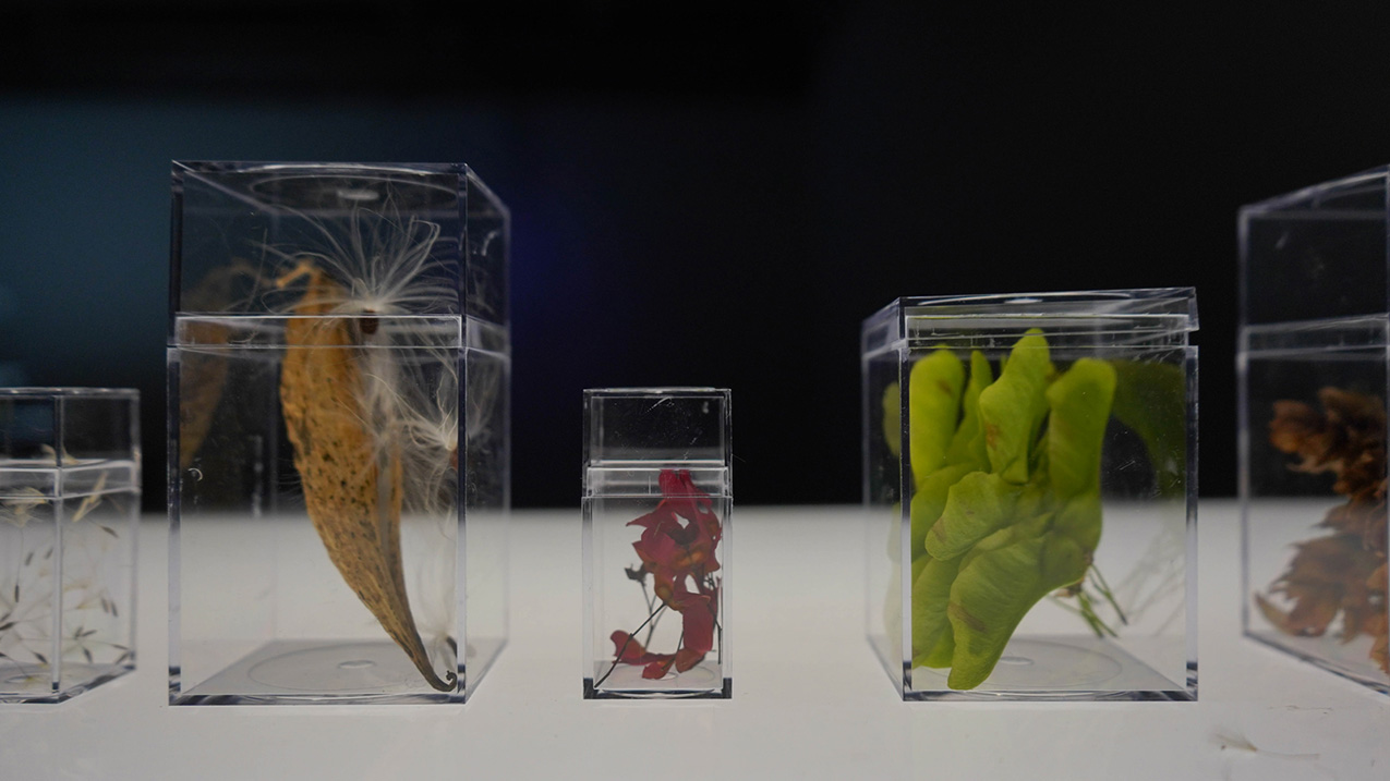 clear speciment containers display various seed pods