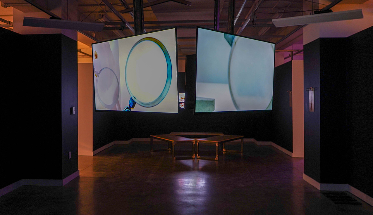dark gallery space with benches and large video screens showing magnifying glasses
