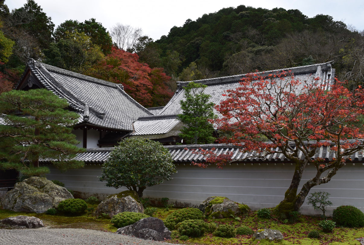 hōjō garden in Nanzen-ji with small ornamental trees in front of a garden wall and temple roofs in the background