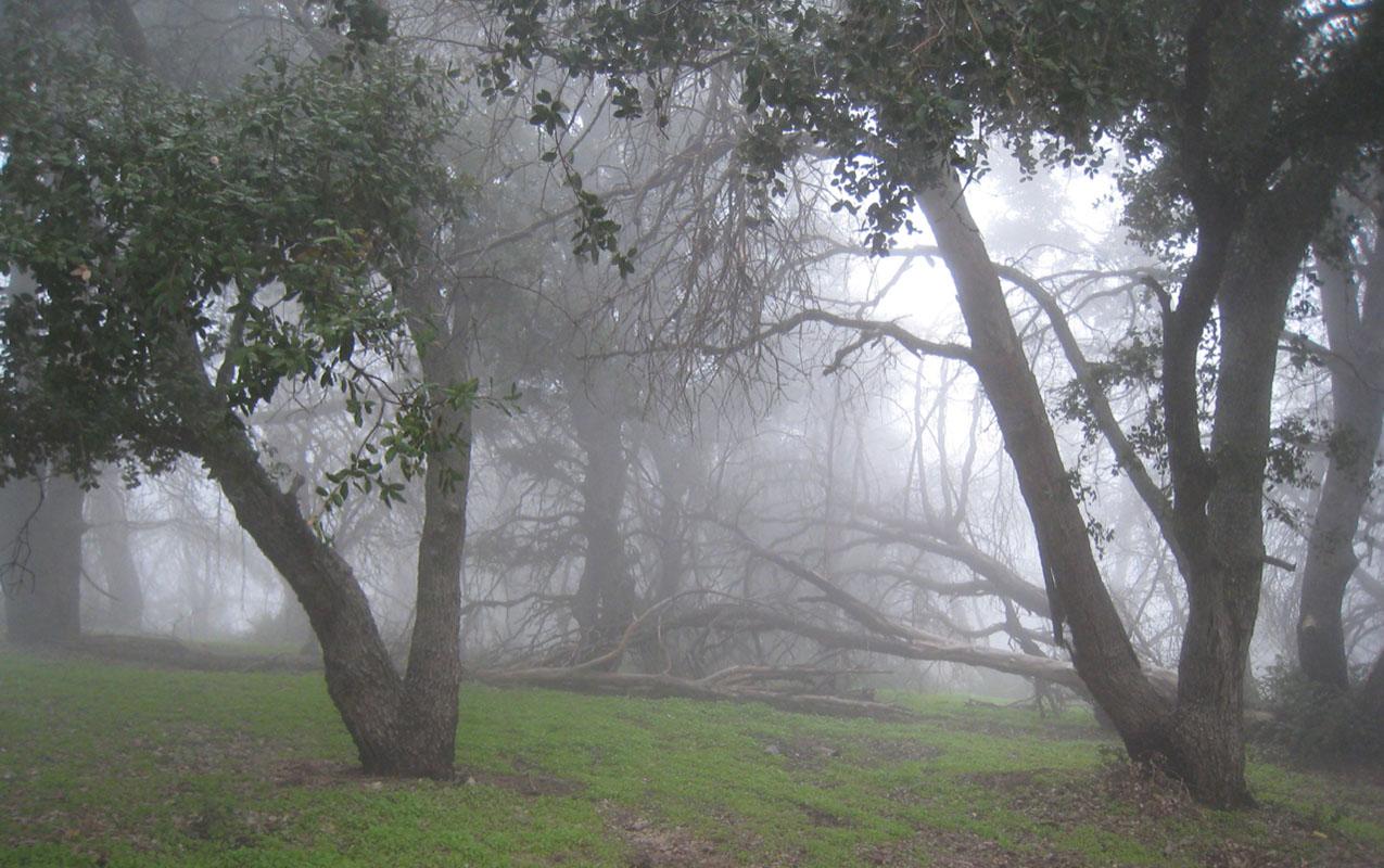 misty oak woodland